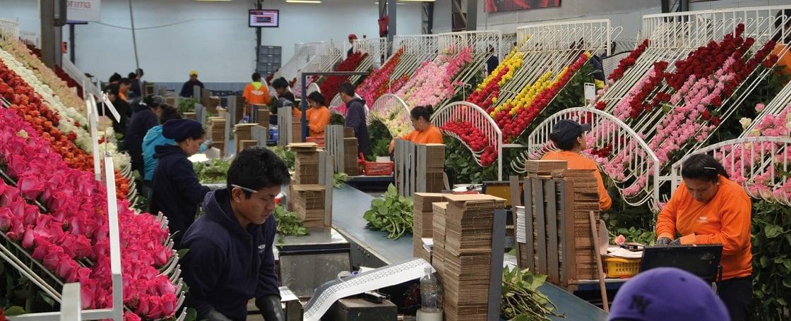 FarmDirect rozen sorteren 1120x455